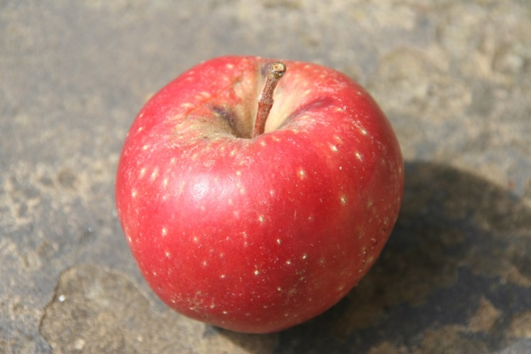 Single apple small
