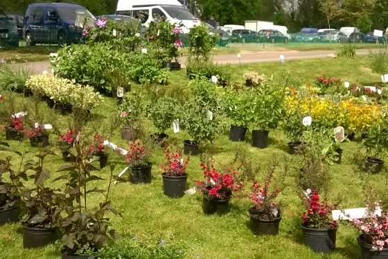 PlantRow small